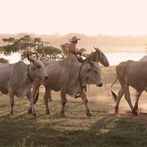 Idées voyage : Le Pantanal, un paradis naturel