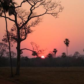 Un voyage au Pantanal vous offrira une immersion complète dans une nature sauvage. Profitez ainsi d'un repos absolu durant votre voyage au Brésil.